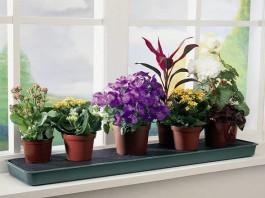 Какие комнатные цветы полезны