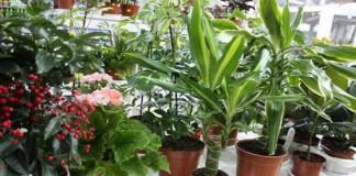 Какие комнатные цветы очищают воздух