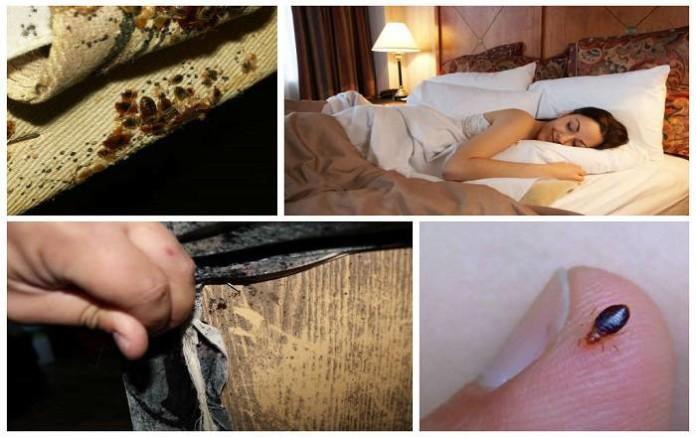 Как избавиться от постельных клопов