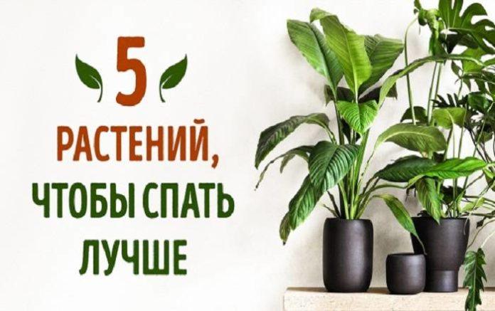 5 растений, чтобы лучше спать
