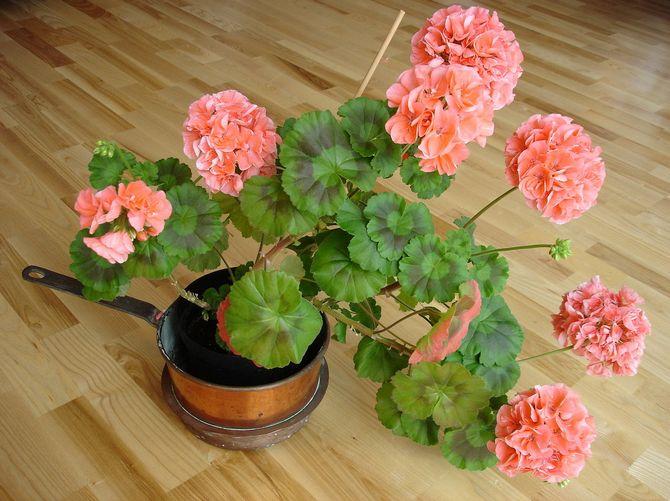 Четыре комнатных растения которые должны быть в каждой квартире