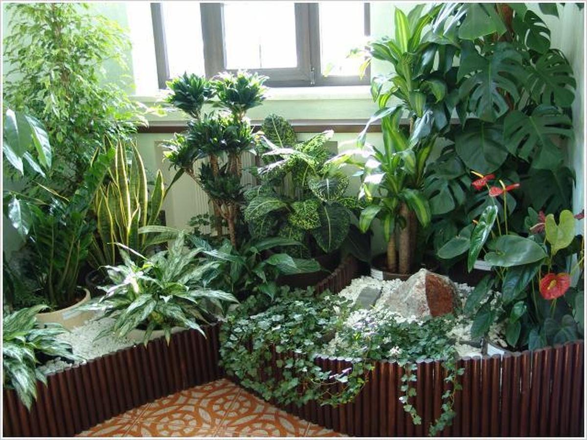 Как правильно опрыскивать комнатные растения.