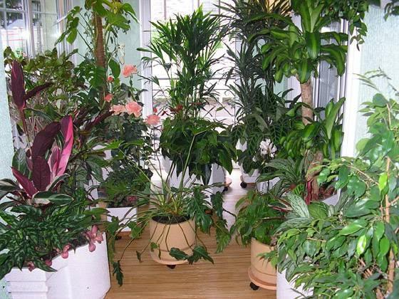 Энергетика домашних растений