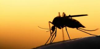 Травы, которые прогоняют комаров
