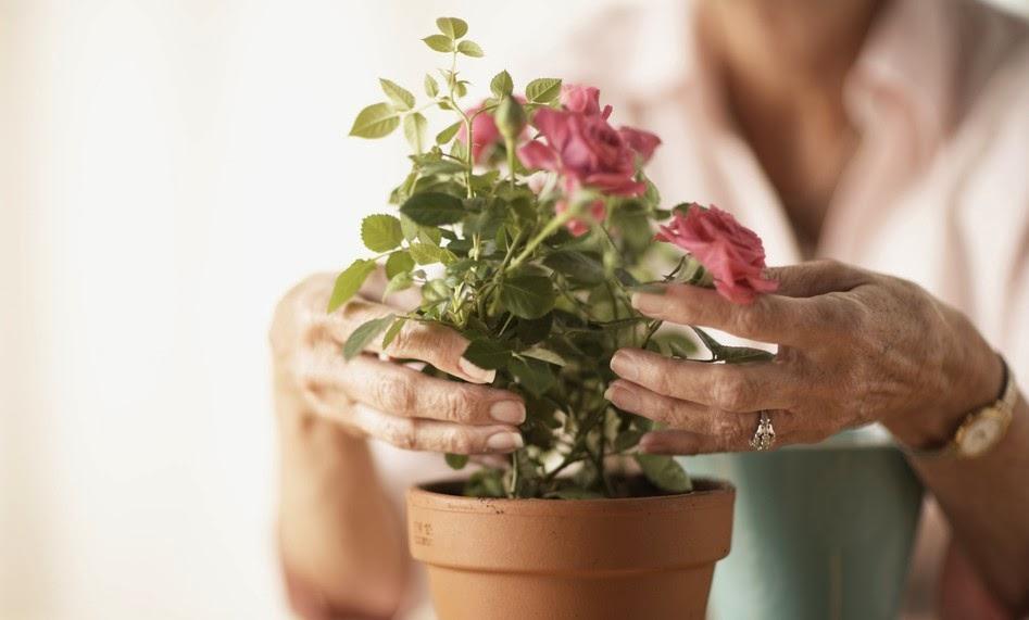 6 бабушкиных советов по уходу за цветами
