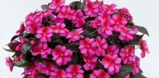 10 натуральных удобрений для домашних цветов