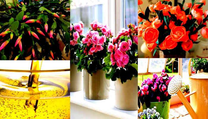 Чтобы цветы цвели пышно и долго!