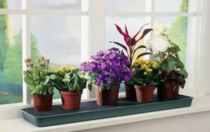 Десять причин, по которым гибнут цветы в доме