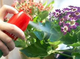 Как вылечить комнатные растения от тли и клещей