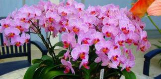 Удобряйте орхидеи, ПРАВИЛЬНО