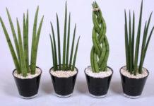 9 комнатных растений, которые подходят для спальни