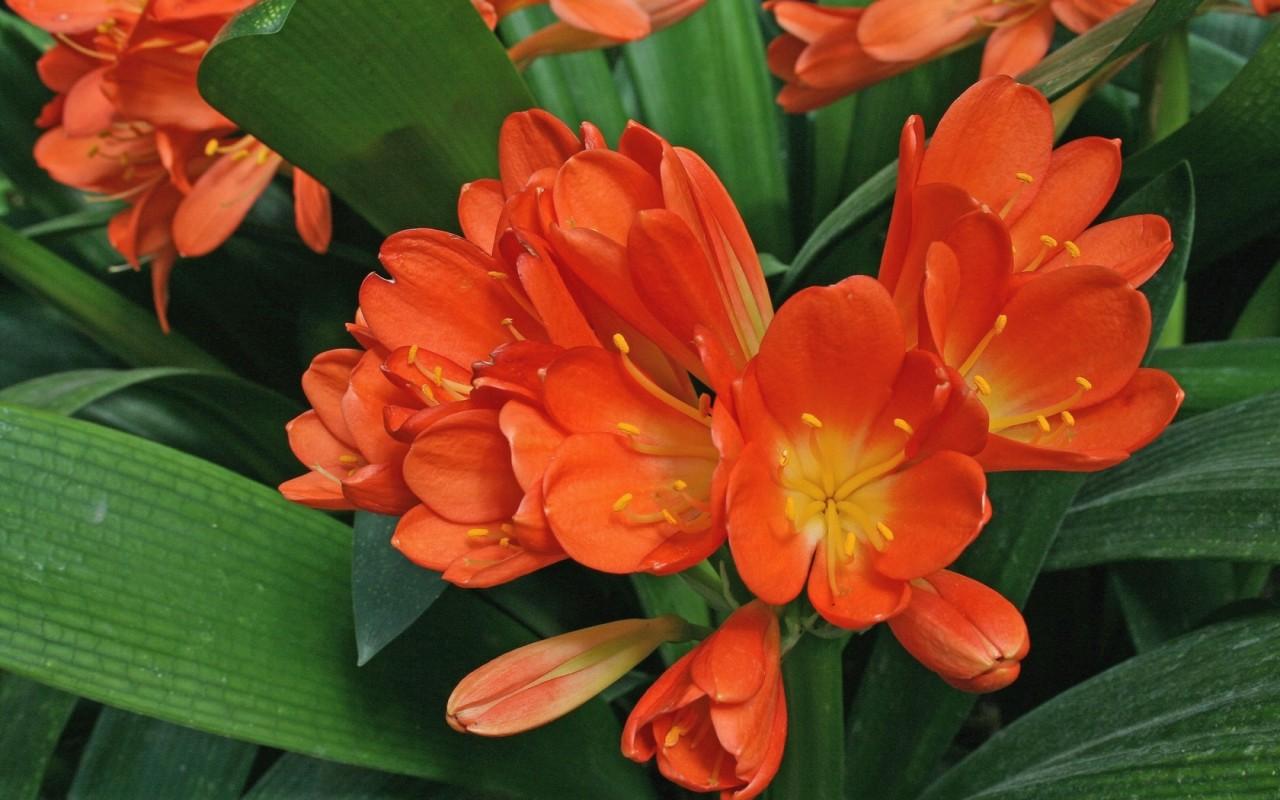 Цветы для северного подоконника