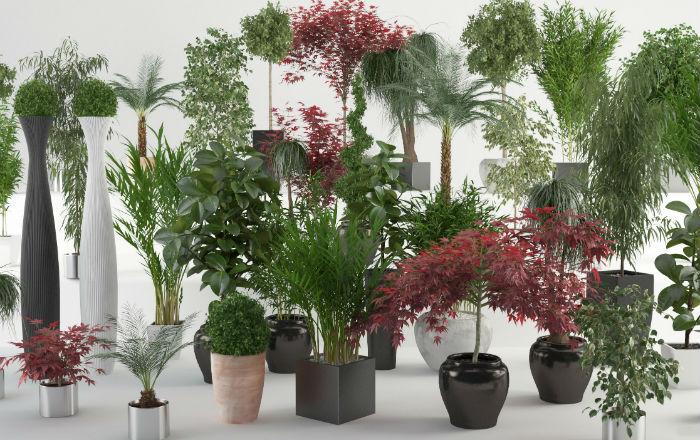 Полезные советы. Защити комнатные растения от болезней