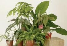 5 необычных подкормок для комнатных растений