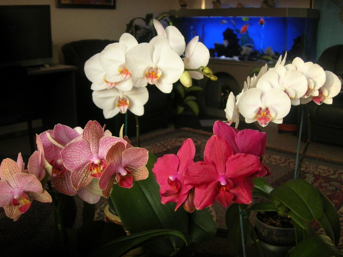 Орхидея. Что делать после цветения