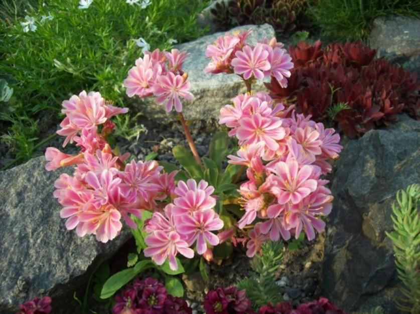 komnatnyj-cvetnik-iz-sukkulentov18