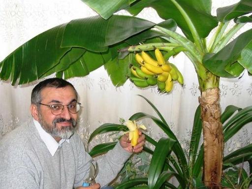 bananovye-dzhungli-v-kvartire