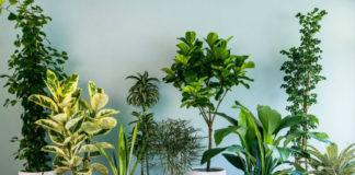 Привлекаем удачу в дом с помощью комнатных растений