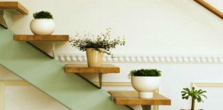 Подборка комнатных растений для ленивых