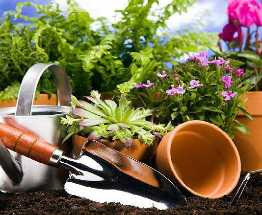 Натуральные подкормки для комнатных растений и рассады