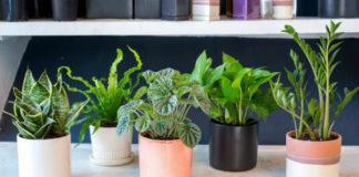 5 растений для спальни, которые помогут улучшить качество сна