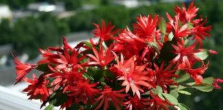 7 лучших комнатных растений, которые цветут зимой