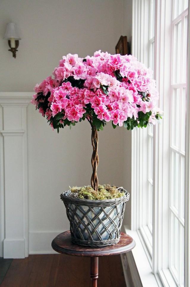 7-luchshix-komnatnyx-rastenij-kotorye-cvetut-zimoj11