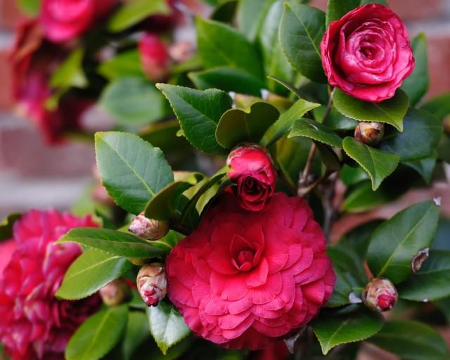 7-luchshix-komnatnyx-rastenij-kotorye-cvetut-zimoj12