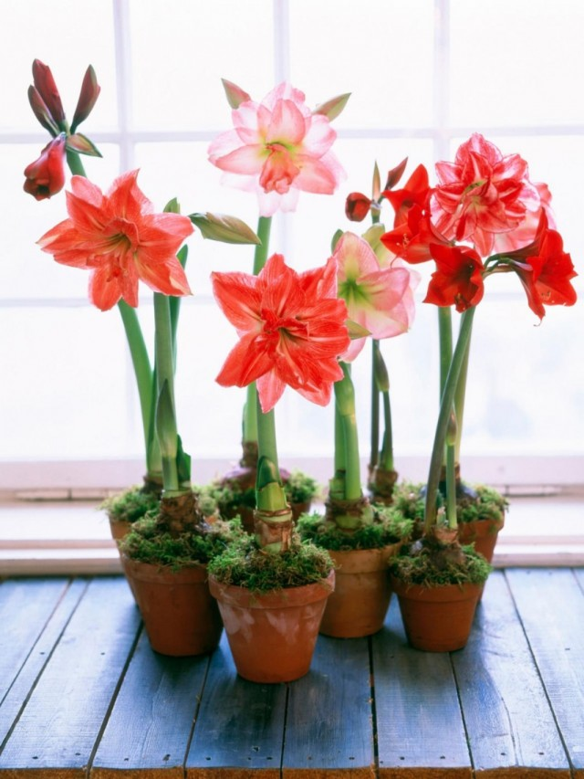 7-luchshix-komnatnyx-rastenij-kotorye-cvetut-zimoj4