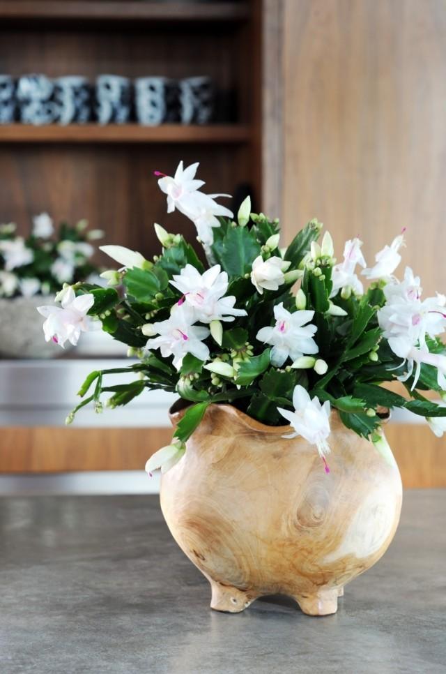 7-luchshix-komnatnyx-rastenij-kotorye-cvetut-zimoj7