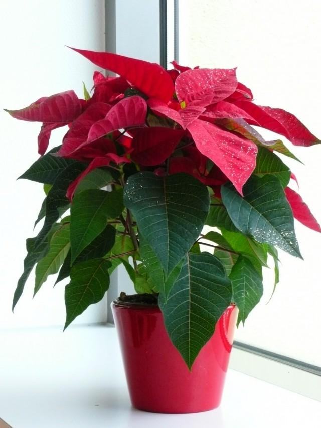7-luchshix-komnatnyx-rastenij-kotorye-cvetut-zimoj9