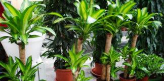 Как комнатные растения влияют на наш дом