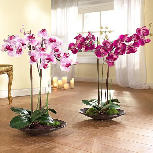 Phalaenopsis как ухаживать в домашних условиях