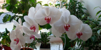 Где лучше разместить орхидеи - совет от опытного цветовода