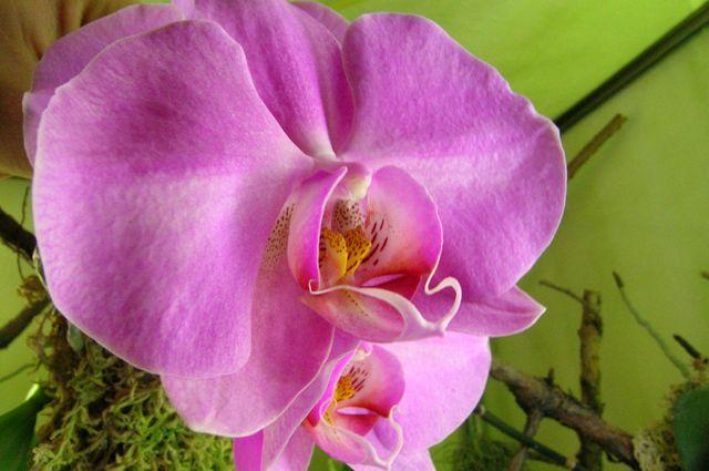 gde-luchshe-razmestit-orxidei-sovet-ot-opytnogo-cvetovoda3