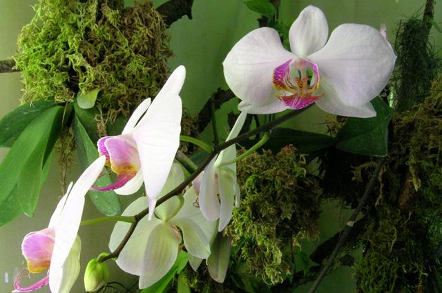 gde-luchshe-razmestit-orxidei-sovet-ot-opytnogo-cvetovoda7