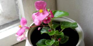 Комнатных растений, которые цветут даже зимой