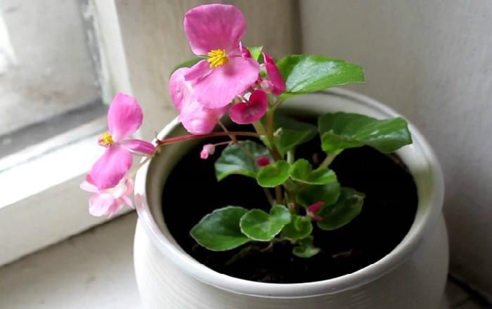 Цветок который цветет зимой красными цветами