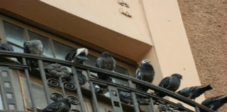 Инструкция по защите балкона от голубей (видео)
