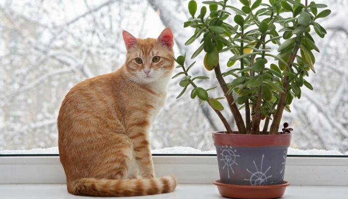 Как отучить кота есть цветы и комнатные растения
