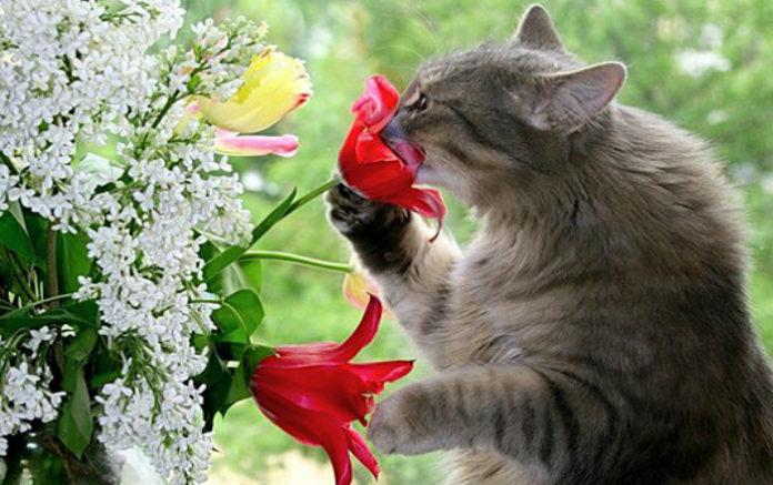 Способы отучить кота есть комнатные растения