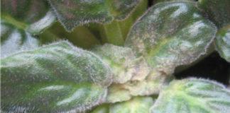 Какие могут быть болезни у комнатных растений