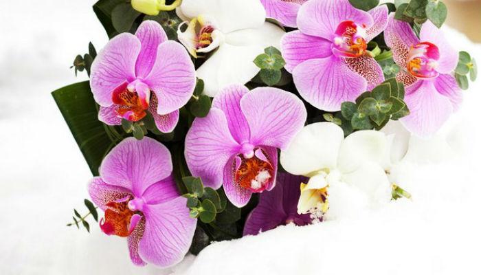 Содержание орхидей зимой: 14 полезных советов