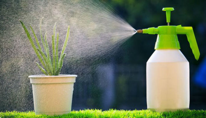Влажность воздуха для комнатных растений