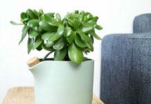 Влияние комнатных растений на атмосферу дома