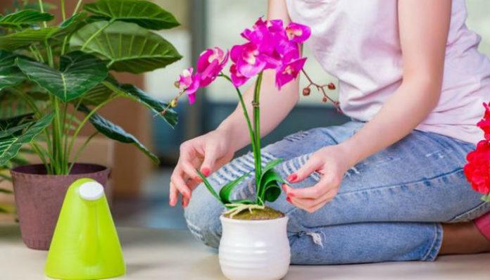 Что любят комнатные растения