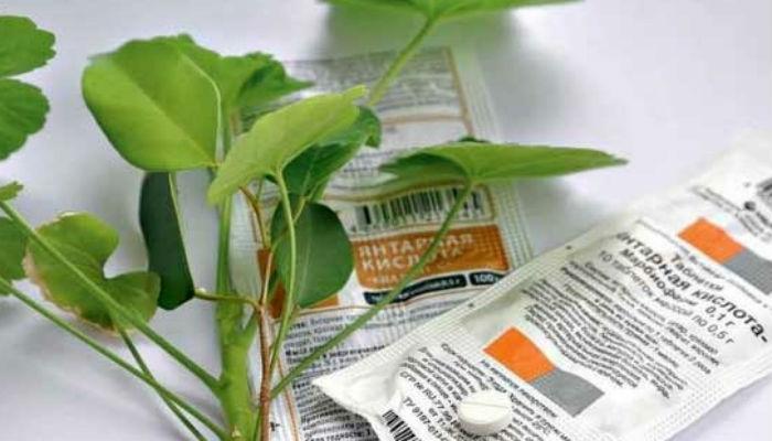 Это средство реанимирует даже самое безнадежное растение