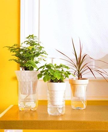 5 способов спасти комнатные растения, пока вы в отпуске
