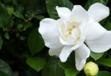 8 растений, которые необходимо завести дома и в офисе