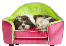 9 способов сохранить дом чистым, если у вас есть собака или кошка